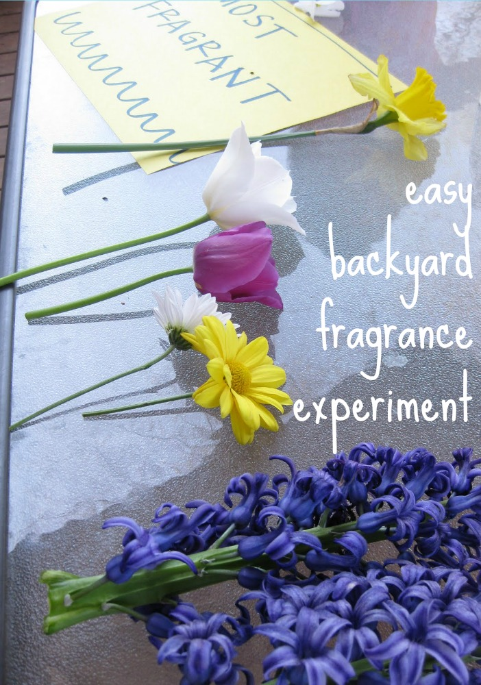 easy backyard fragrance experiment
