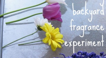 our easy and exciting backyard fragrance experiment
