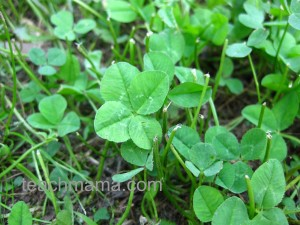four leaf clover post, teachmama's best of 2011