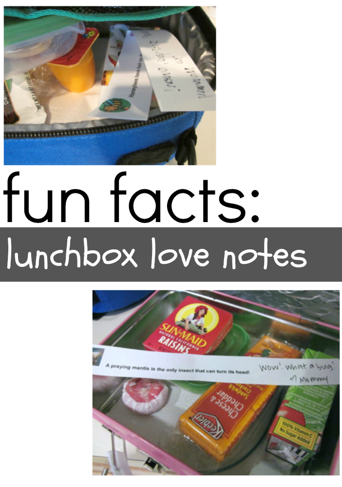 fun facts lunchbox love notes