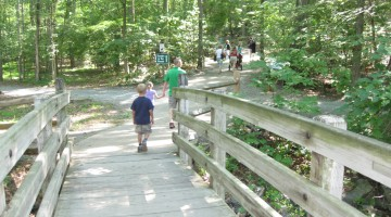 wolf trap's theater in the woods