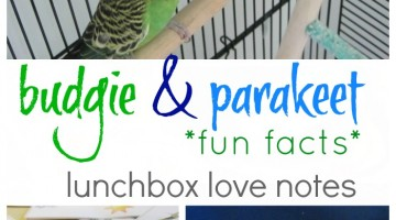 budgie and parakeet fun fact lunchbox notes: help kids find reliable sources online