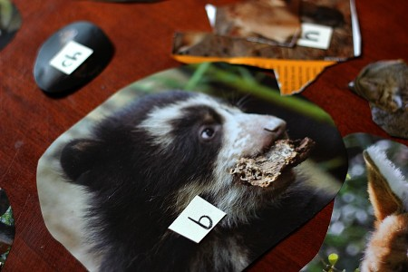 phonemic awareness and classification with zoo magazine pictures | guest post by @aubreyhargis on @teachmama #weteach