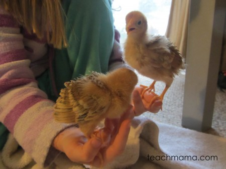 chick hatching | teachmama.com