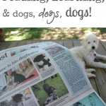 reading, learning, and dogs, dogs, dogs