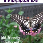 everyday math activities for kids | cool, fun, totally cool math ideas