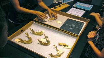 smithsonian museum of natural history: a fabulous, family-friendly field trip