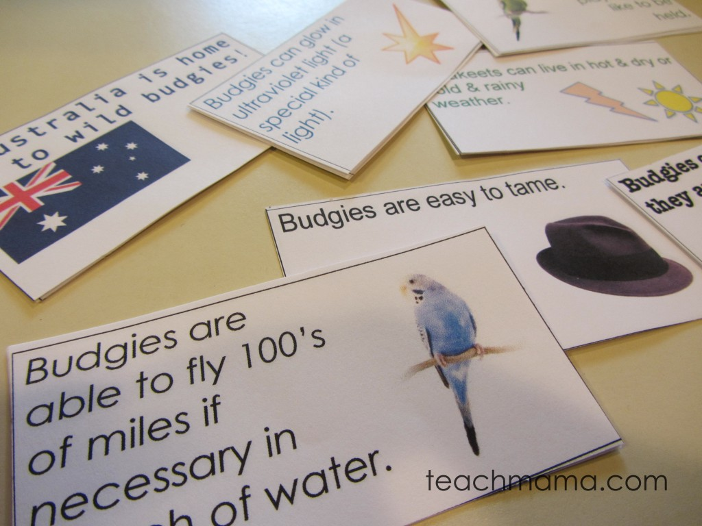 budgie parakeet lunchbox notes
