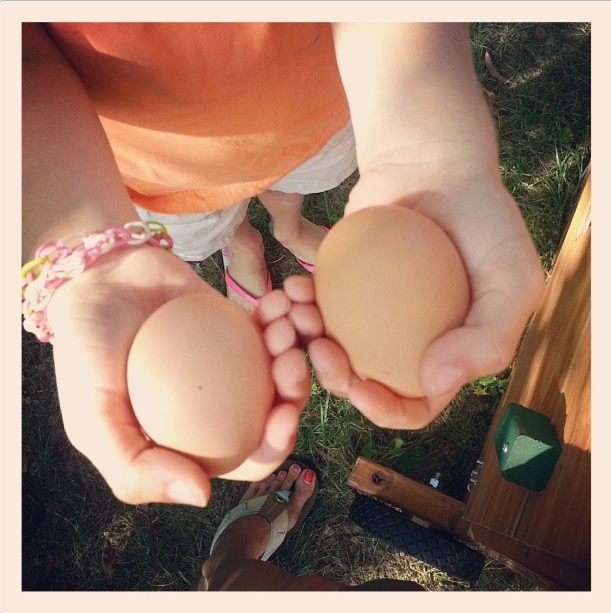 backyard chickens for learning and fun teachmama.com