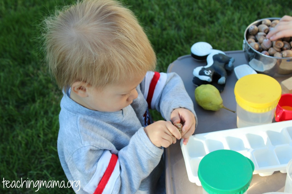 invitation to play with acorns
