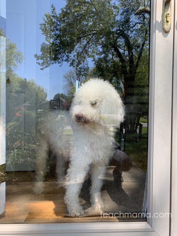 dog at door watching kids ride away